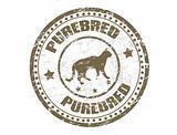 Purebred cat stamp