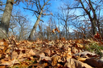 Forest Scene - Illinois