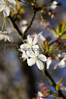Close-up tree blossom