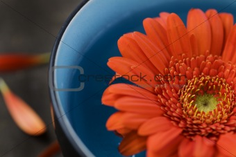 bowl of water and flower