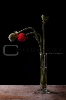 Poppies in Vase