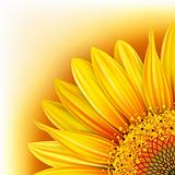Background with sunflower