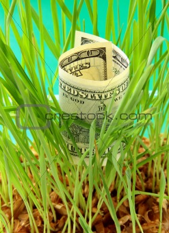 One Hundred dollar bill growing in the green grass