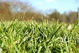 Fresh blades of grass in spring