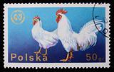 Poland - CIRCA 1970: A stamp - Cock
