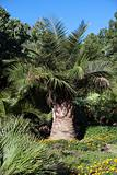 tropical palm park