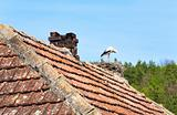 Black-white stork in nest on the roof.