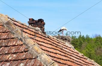 Black-white stork in nest on the roof.