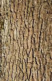 oak trunk bark background
