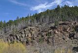 Deadwood Trees on a hill