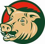 wild boar or razorback