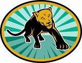 lion or cougar crawling towards you