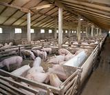 PigFarm