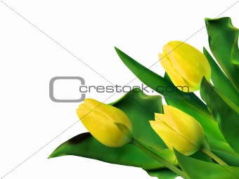 Bright yellow tulips isolated on white. EPS 8