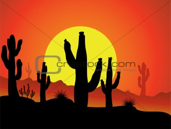 cactus in desert