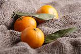 Mandarins on canvas