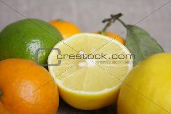 Citrus on canvas