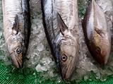 Fishmarket in Taiwan