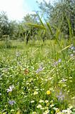 Meadow & flowers