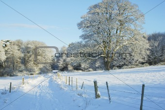 country track, trees and meadow in the snow