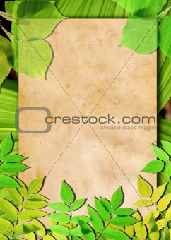 Old paper background with green leaves