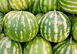 Ripe watermelons for sale at street market