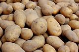 Organic potatoes on a market stall