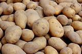 Organic potatoes on a market stall