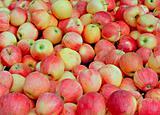 Tasty organic apples on a market stall