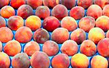 Fresh peaches on market stall
