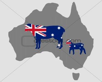 Australian sheeps