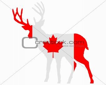 Canadian deer