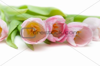 Bouquet rose tulip