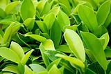 Lush green plant