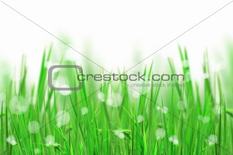 beautiful fresh grass and light reflect for background