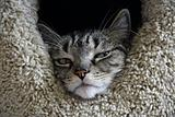 Resting Feline