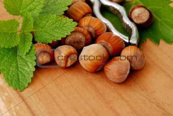 Hazelnuts with pincers 3
