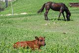 calf and horse on the grassland