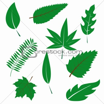 A set of green leaves to the design