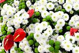 Multicolor background made of different flowers