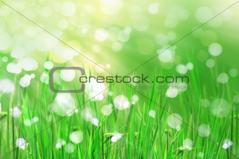 beautiful fresh grass and light reflect in morning