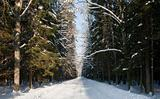 Snowy wide ground road crossing old mixed stand