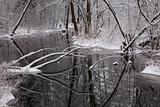 Snowy riparian forest over river