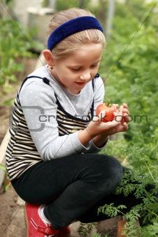 Harvest from glasshouse