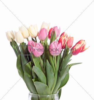 bouquet of fresh tulips