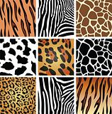 animal skin textures