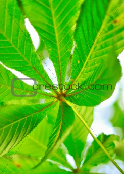 Green leaf floral background over blue sky