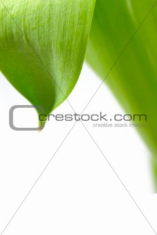 Green leaf floral background over white