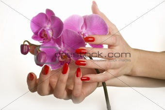 Beautiful hand with red manicure holding pink orchid flower