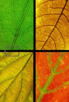 four color leaf texture
